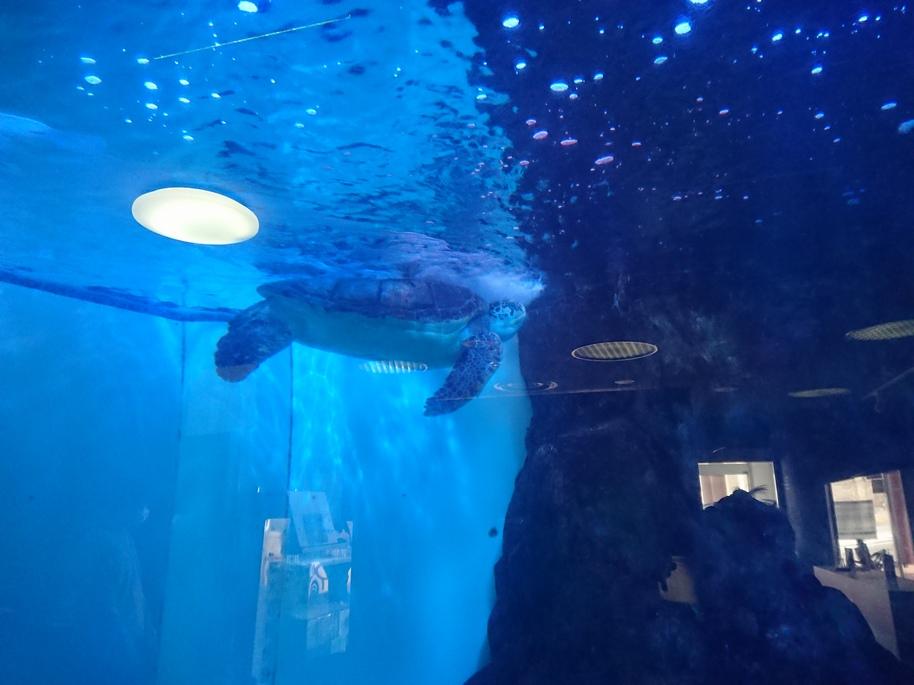 ダイハツ専門店 D-フォーラム|長岡市 中古車|スタッフブログ|寺泊水族館